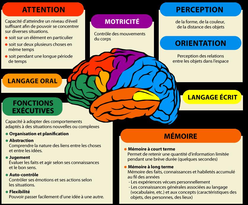 FOnctionnement cognitif - Tours - cerveau évaluation